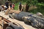 Bắt được 'quái sấu' khổng lồ sau 8 năm tìm kiếm