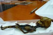 Tranh cãi về xác ướp tí hon nghi của người ngoài hành tinh