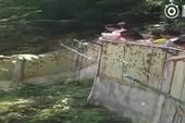 Hết vặt đuôi công, du khách Trung Quốc ném đá gấu trúc