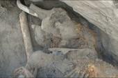 Phát hiện giống voi ma mút khổng lồ mới tại Siberia