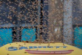 40.000 con ong xâm lấn Quảng trường Thời đại ở Mỹ