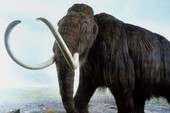 Voi ma mút tuyệt chủng 40.000 năm sắp được tái sinh?