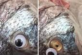 Choáng với chiêu lừa mới biến cá ươn thành cá tươi