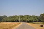 Chiêm ngưỡng cây đa khổng lồ, lớn bằng một khu rừng