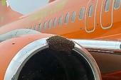 Máy bay hoãn chuyến vì ong tấn công động cơ