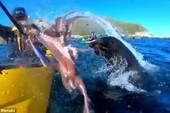 Hải cẩu nghịch ngợm, tát bạch tuộc vào mặt du khách