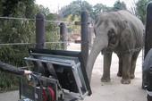 Thích thú với chú voi biết giải toán trên máy tính bảng