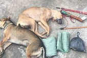 Nghi can trộm chó dùng ớt bột tấn công lực lượng truy bắt