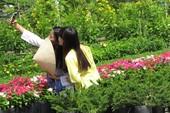 Về làng hoa Sa Đéc chụp ảnh 'tự sướng'