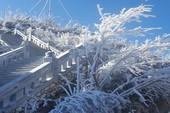 Ngắm băng tuyết phủ trắng đỉnh Fansipan