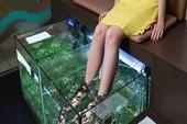 Rớt sạch móng sau khi massage chân bằng cá