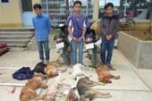 Tòa Bình Chánh lại sai khi xử vụ trộm chó