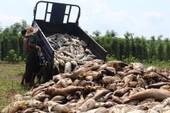 Cá chết trắng đập ở Bình Phước là do nước thiếu hụt ôxy