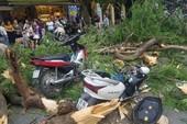 Hà Nội: Cổ thụ bất ngờ bật gốc, 5 người nhập viện cấp cứu