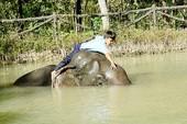 Truyền nhân nhí Buôn Đôn thì thầm khiến voi nghe tăm tắp