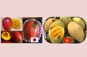 Xoài đỏ Nhật 1,7 triệu/trái khác xoài đặc sản Việt ra sao?