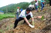 Hỗ trợ 4,9 tỉ đồng trồng rừng sản xuất