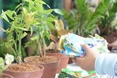 Bảo vệ môi trường từ những chậu cây xanh