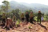 Giám định rừng ở Bình Định để khởi tố