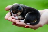 Đi tìm trách nhiệm người nuôi chó