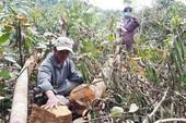 Cử tri bức xúc nạn phá rừng, thuốc dỏm, tham nhũng