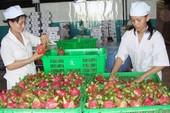 Hàng Việt nhộn nhịp xuất ngoại  đầu năm