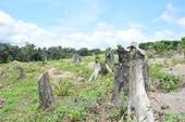 Phó Thủ tướng yêu cầu kiểm tra đất, rừng bị xâm chiếm