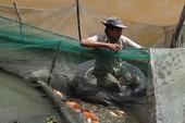 Nước đen vây bủa, triệt đường sống người nuôi cá