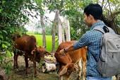 Cán bộ 'xẻ thịt' bò chính sách