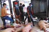 Heo dính thuốc an thần: Sở NN&PTNT không tham mưu xử phạt