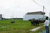 TP.HCM: Lúng túng xử lý nhà trái phép ở nông thôn