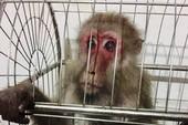 Dùng Facebook rao bán thú rừng quý hiếm