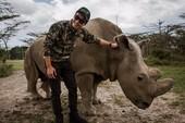 MC Phan Anh đau buồn trước cái chết của tê giác Sudan
