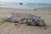 2.000 tỉ hỗ trợ thiệt hại do sự cố biển cho Quảng Bình