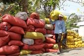 Tập đoàn gạo lớn nhất Úc thâu tóm nhà máy chế biến gạo của VN