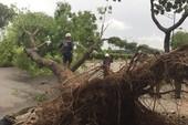 TP.HCM: Cây lớn ngã đổ do gió giật, 3 người đi đường bị thương