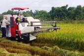 Công an bắt 2 kẻ 'bảo kê' gặt lúa ở Nghệ An