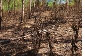 Điều tra vụ cháy rừng cao su bất thường ở Bình Phước