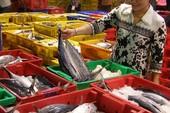 Cá, tôm, mực... Việt Nam dính 'đòn đau' vì thẻ vàng EU
