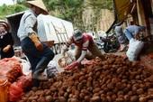 Biến khoai tây TQ thành hàng Đà Lạt: Coi chừng Mỹ trừng phạt