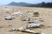 Vụ cá chết ở biển miền Trung và sự lo ngại của Hội Nghề cá
