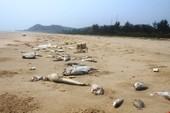 Toàn cảnh vụ cá biển chết hàng loạt ở 4 tỉnh miền Trung