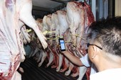 Ban QL An toàn thực phẩm xung phong đeo vòng cho heo