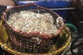Phạt một cơ sở sản xuất bắp chuối bào ngâm hóa chất