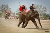 Về Buôn Đôn xem voi đá bóng, chạy đua