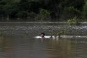 2 tỉnh bị ngập, Campuchia tính đòi Lào bồi thường