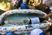 Cá heo dạt vào biển Mỹ Khê, Đà Nẵng