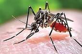 Nguy cơ bệnh sốt rét bùng phát ở Phú Quốc