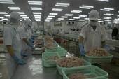 Tiêu chuẩn xuất khẩu cá tra sang Trung Quốc ngày càng khắt khe