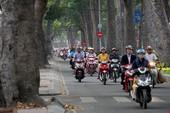 Đốn cây xanh đường Tôn Đức Thắng: GĐ Sở GTVT nói gì?
